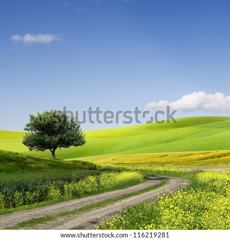 Green Grass Field Landscape with fantastic clouds in the background #116219281