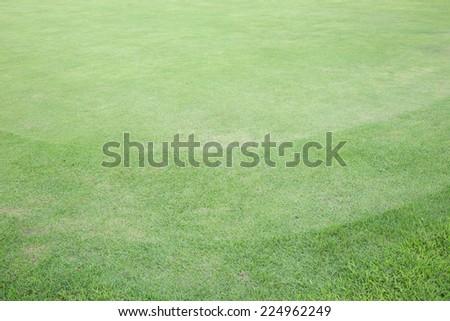 green grass field of golf course, sport background