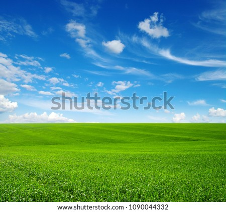 Green grass field on hills and blue sky with clouds #1090044332