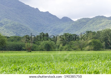 Green grass field rural landscape with trees