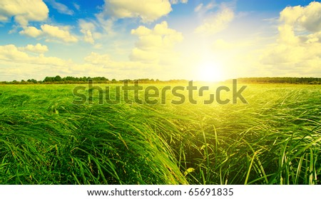 Green grass field under sunset sun on blue sky. The larch forest on background.