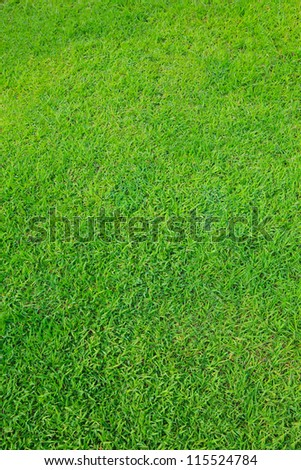 green grass field use as nature background