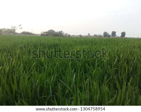 Green grass field with eye catchy grenery