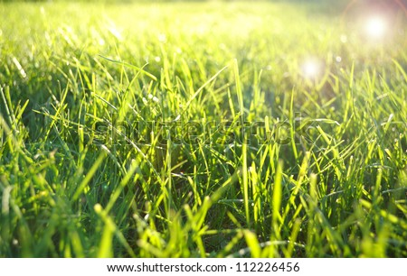 Green grass field with lens flare effect