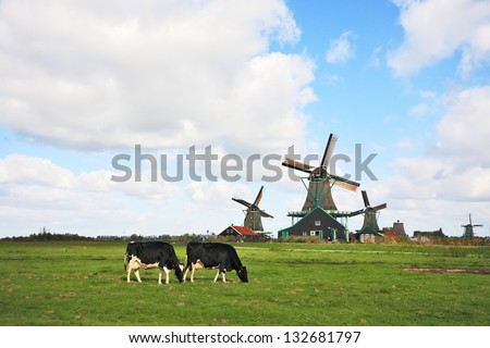 Green grass field with windmills, which graze fat cow