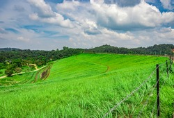 green grass fields with beautiful hiking trails image is taken at banasura sagar dam wayanad kerala india. the natural beauty of this place is amazing.