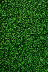 Green grass for background and wallpaper