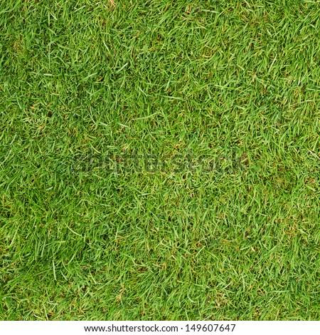 Green grass fragment as a background texture