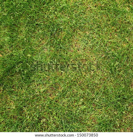 Green grass fragment as a background texture