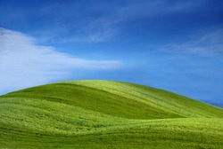 Green grass (golf course)