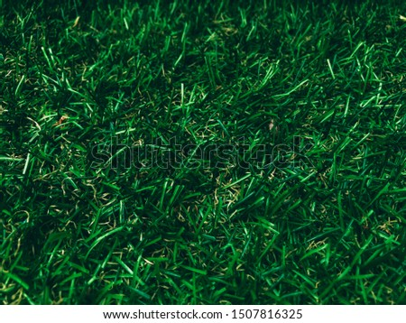 Green grass Green lawn Green grass ground
