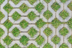 Green grass growing between elements of paving tiles as a background or texture