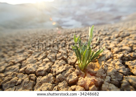 Green grass growing through dry cracks. Shallow DOF, focus on plant.