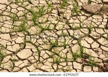 green grass growing trough dead soil - stock photo