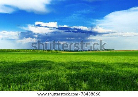 Green grass grows on the field against a blue sky and clouds