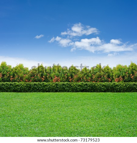 Green grass, hedge and tree on cloudy sky
