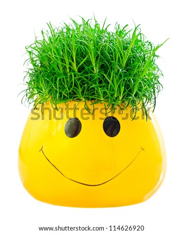 Green grass in a fun pot on a white background.