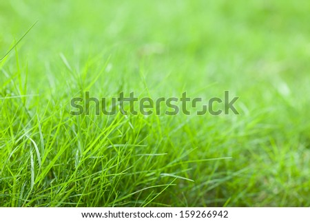 green grass in growth season