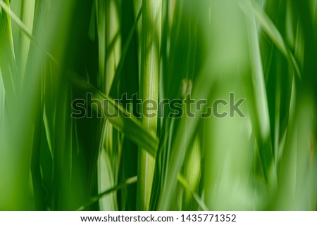 green grass in meadow pasture with blur effect. macro nature textured abstract background. ecological value #1435771352