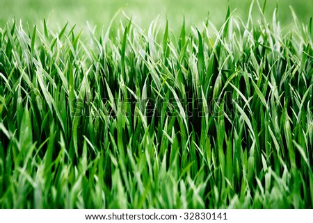 Green grass in spring