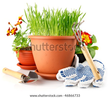 green grass in the pot with red flowers isolated on white background