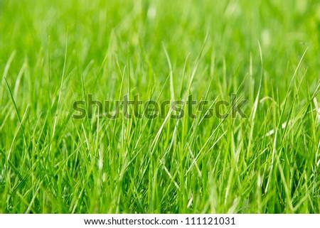 green grass in the summertime #111121031