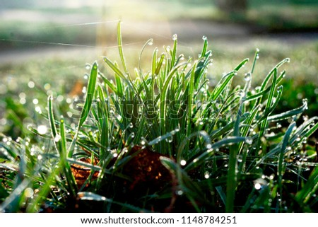 green grass in the sun and drops of dew #1148784251