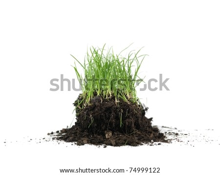 Green grass isolated against a white background
