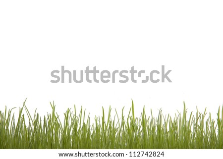 Green Grass, isolated on white