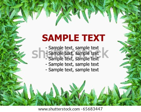 Green grass isolated on white background with text