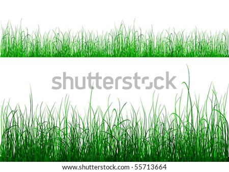 Green grass isolated on white - raster image.