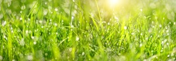 green grass landscape. grass with drops dew close up. artistic image of purity freshness nature. ecology, earth day concept. banner