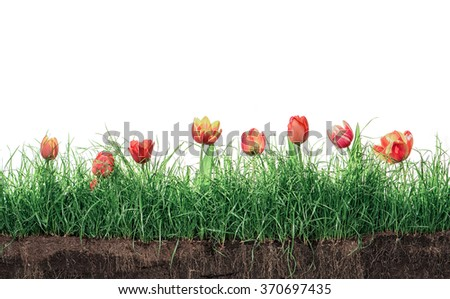 Green Grass Lawn Spring Flowers Isolated On White Floral Nature Flower Background