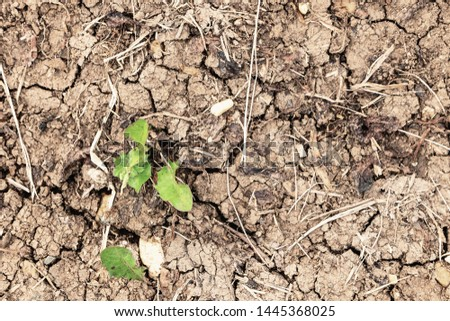 Green grass leaves on drought land. Drought and cracks in the soil