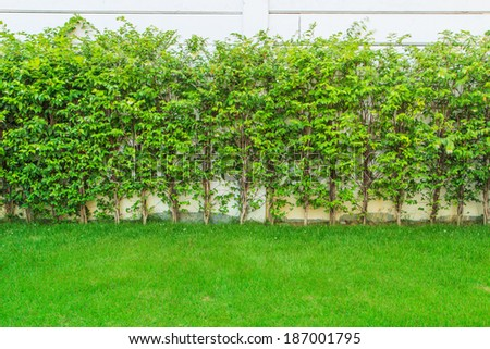 Green grass leaves wall tree background