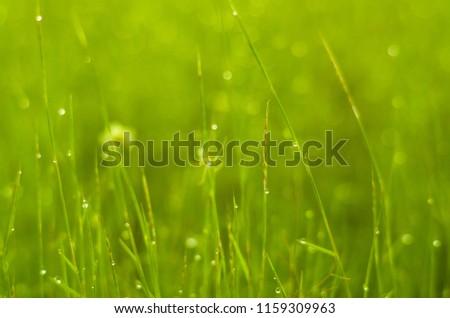 green grass looks very beautiful