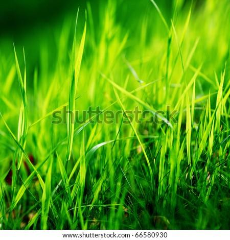 grass macro photography - photo #8