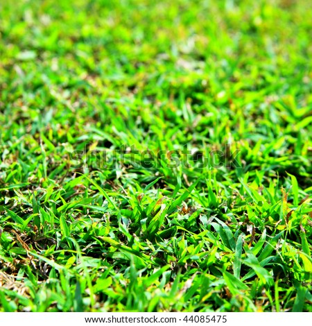Green grass, may be used as background #44085475