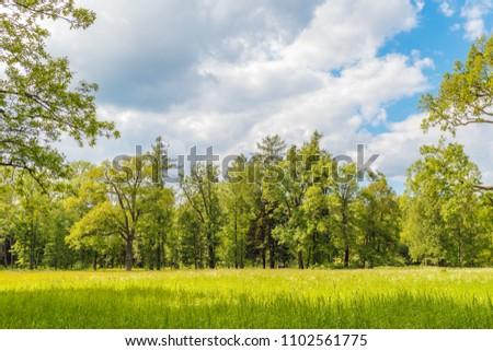Green grass meadow in the forest shot on sunny summer day. Nature background.