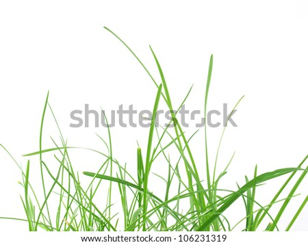 Green grass meadow isolated over white background