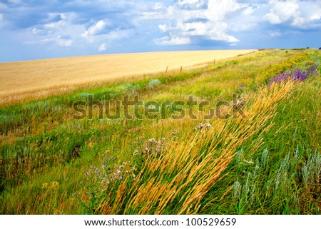 Green grass meadows and fields landscape on a hill in a sunny day