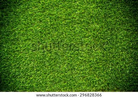green grass natural background texture.