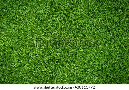 green grass natural background texture - Shutterstock ID 480111772