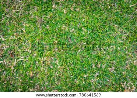 Green grass. natural background texture.  #780641569