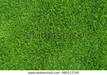 Green grass natural, background texture. Green grass texture background - Shutterstock ID 480111769