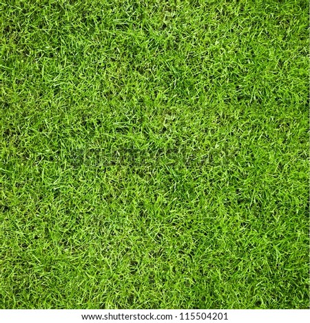 Green grass natural background. Top view.