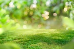 Green grass nature bokeh in garden background.
