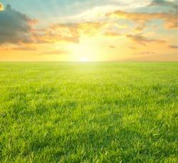 green grass of stadium playground in the morning sunrise with sunbeam.