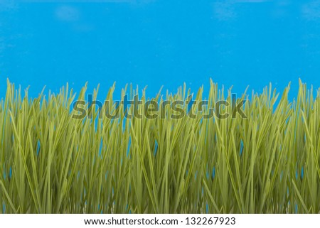 Green grass on a blue background. - stock photo