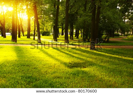 Green grass on a sunny meadow of a city park with tall trees around